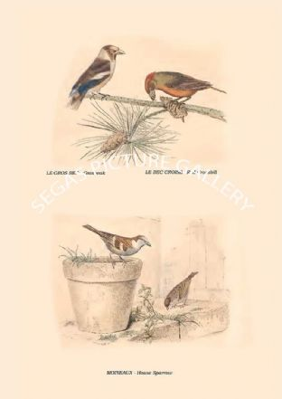 Grosbeak , Red Crossbill, House Sparrow